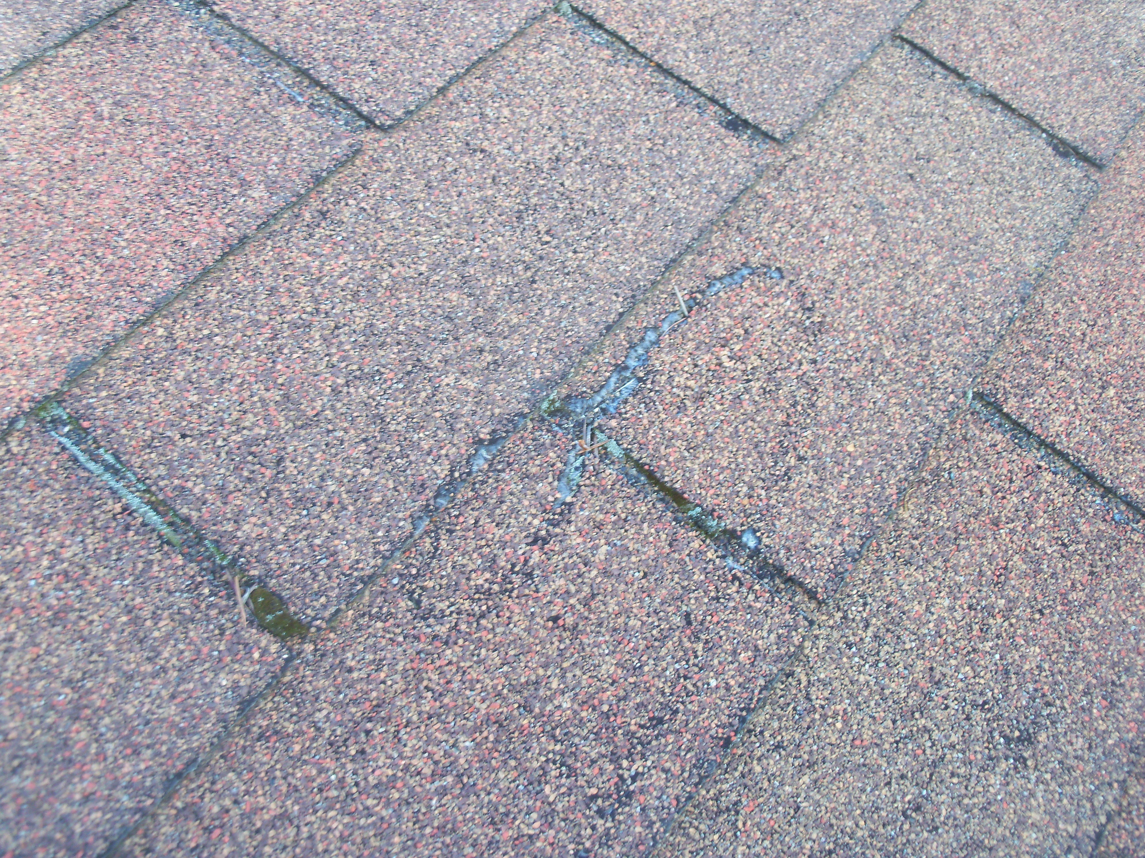 Environmentally Friendly Moss Control For Your Roof