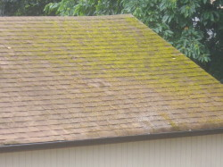 heavy moss on garage roof